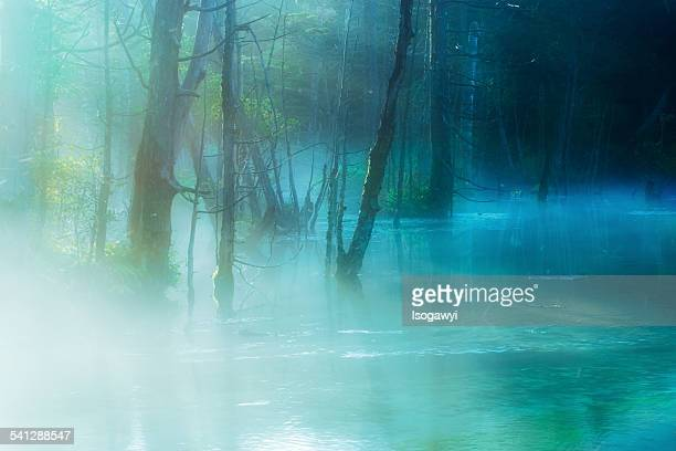 marsh in the morning mist - isogawyi stock pictures, royalty-free photos & images