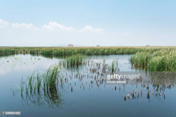 marsh wetland scenery in rural area of southern thailand during day .khao sam roi yot national park . - sumpmark bildbanksfoton och bilder