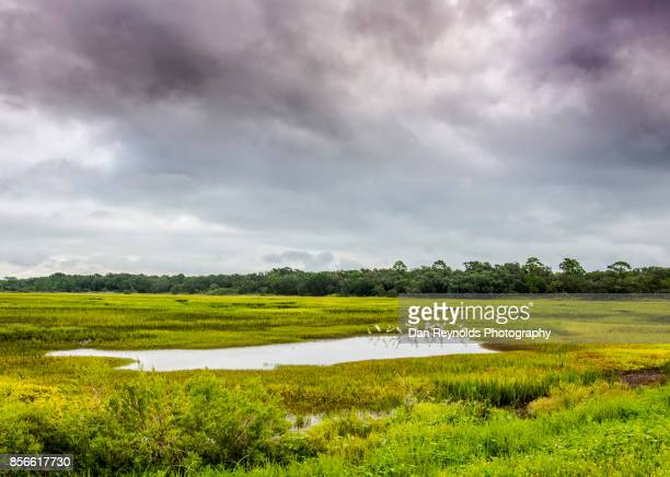 Marsh with wetland grass against dramatic sky-Square