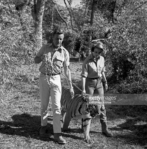 Marshall Thompson and Cheryl Miller star in Daktari a CBS television African adventure series Image dated October 28 1965
