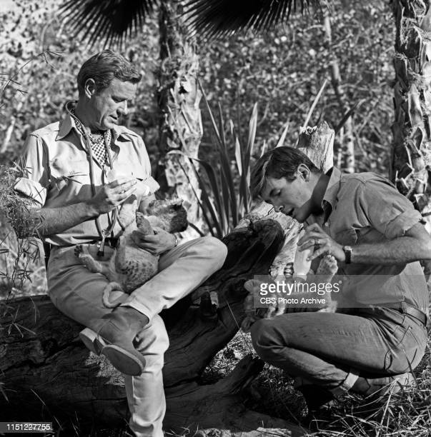 Marshall Thompson and Yale Summers star in Daktari a CBS television African adventure series Image dated October 28 1965