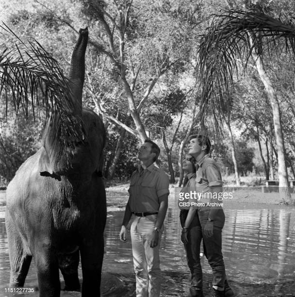 Marshall Thompson Cheryl Miller and Yale Summers star in Daktari a CBS television African adventure series Image dated October 28 1965