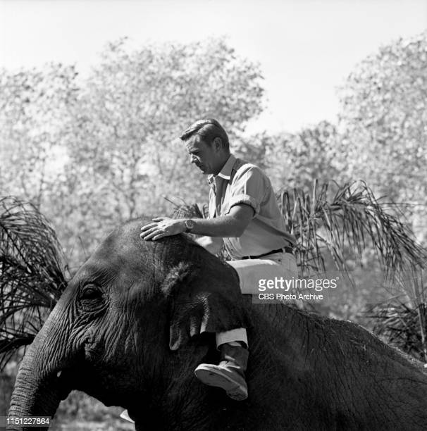 Marshall Thompson stars as veterinarian Dr Marsh Tracy in Daktari a CBS television African adventure series Image dated October 28 1965