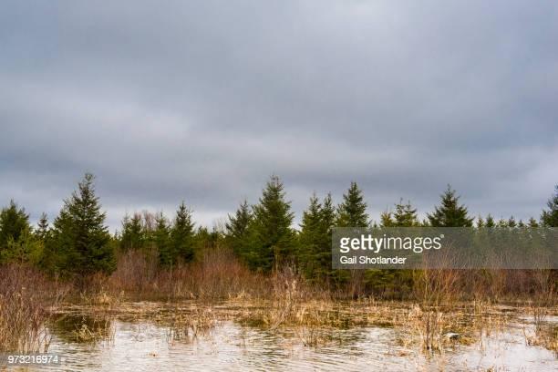 Marshland Floods