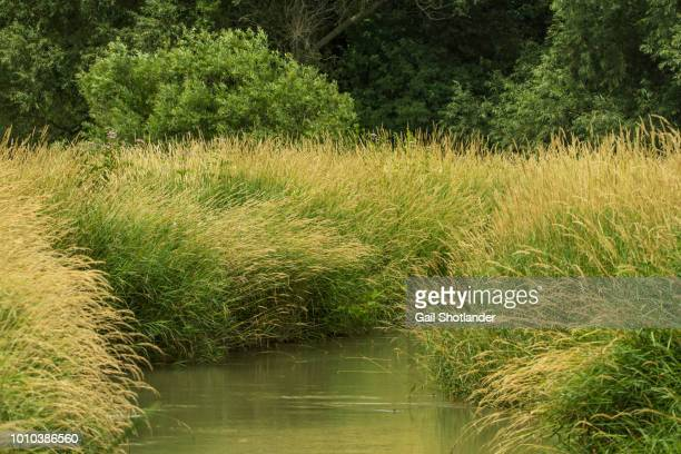 Marshland Grasses on the Creek