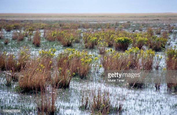 Marshland in Central Anatolia, Turkey