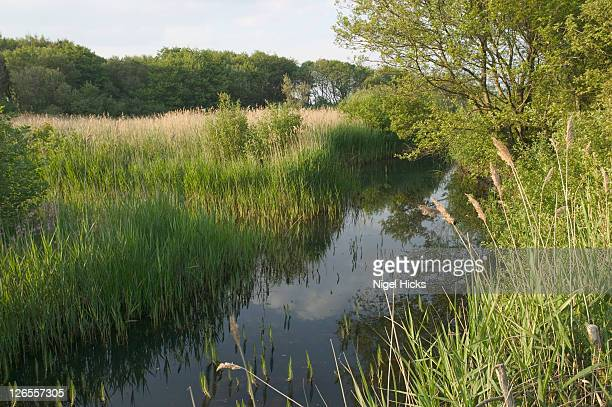 Marshland in Dawlish Warren Nature Reserve, at the mouth of the River Exe on the south Devon coast