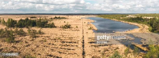 marshland in netherlands - nature reserve stock pictures, royalty-free photos & images