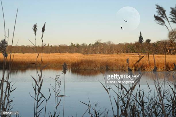 marshland - rye new york stockfoto's en -beelden