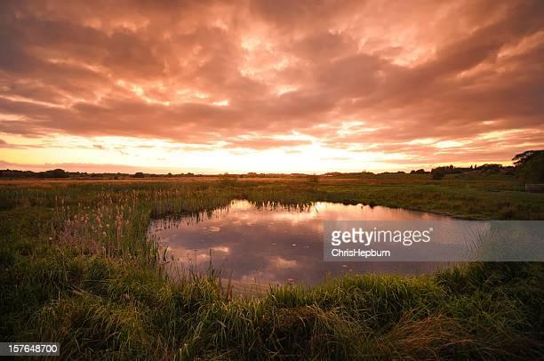 pântano ao pôr do sol - lençol freático imagens e fotografias de stock