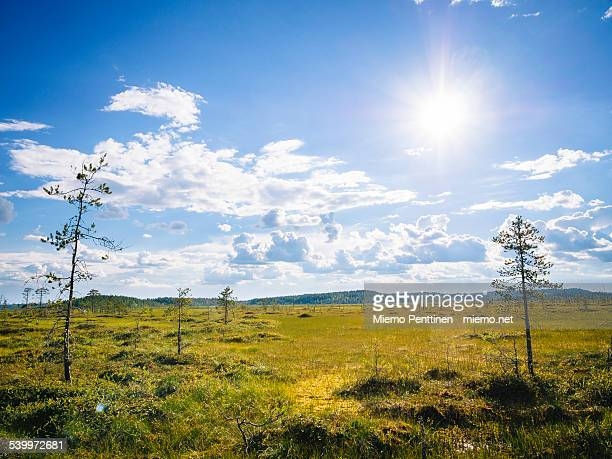 Marshlands in Patvinsuo national park, Finland