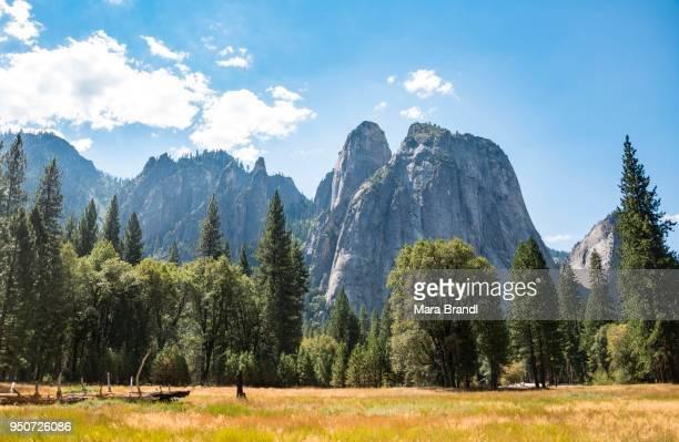 Marshlands in Yosemite Valley, Yosemite National Park, UNESCO World Heritage Site, California, USA