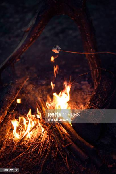 marshmallow roasting on an open fire - warming up stock pictures, royalty-free photos & images