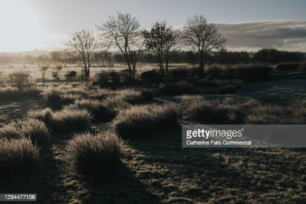 marshy field in low sun. reeds cast long shadows. - plant part stock pictures, royalty-free photos & images