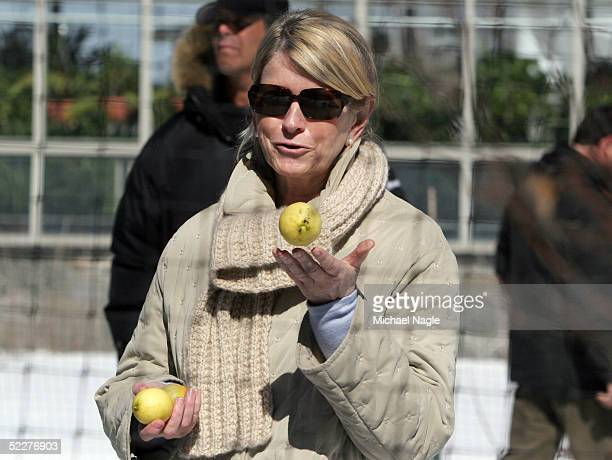 MARCH 4 Martha Stewart shows some lemons grown in her hothouse at her estate March 4 2005in Katonah New York Stewart was released from prison early...