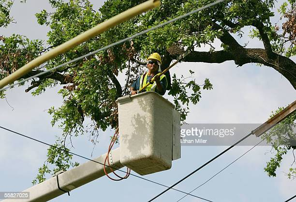 Martin Marcedo of Texas a worker with ABC Professional Tree Services trims a tree damaged by Hurricane Katrina in the Garden District September 29...
