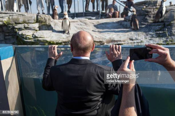 Martin Schulz chancellor candidate of the German Social Democrats is seen looking at penguins at the Ozeanum in the German city of Stralsund during...