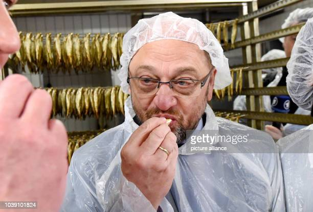 Martin Schulz leading candidate of the SPD party for the general elections tries a Kiel sprat at a fish smokehouse during an election campaign call...