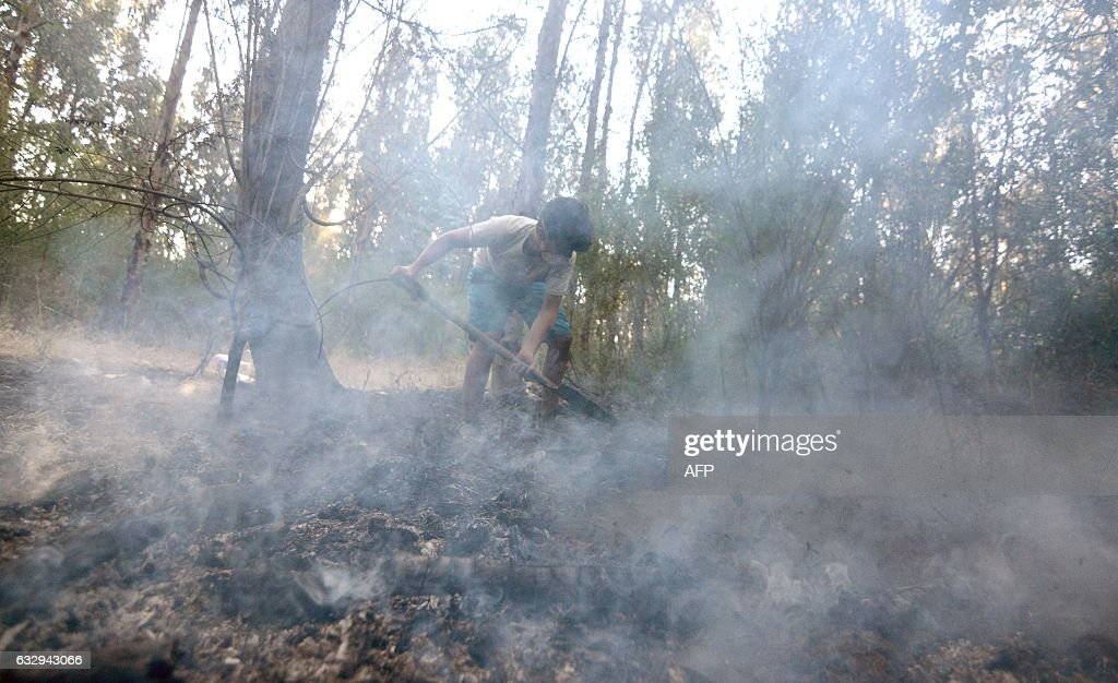 Martin (14) works with a shovel, together with a group of young volunteers from Lirquen, in a effort to extinguish a forest fire in Concepcion, Biobio region, Chile on January 28, 2017. Forest fires ravaging southern Chile have now killed 11 people, President Michelle Bachelet said Saturday, as firefighters waged an all-out battle to extinguish the raging infernos. / AFP / Guillermo SALGADO