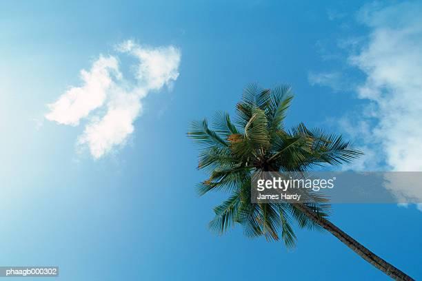 Martinique, palm tree