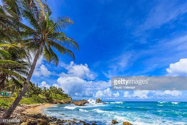 Martin's Bay, Barbados