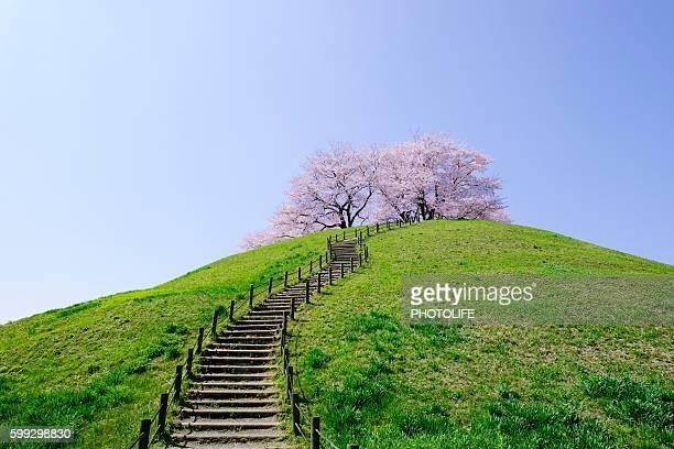 maruhakayama kofun - 埼玉県 ストックフォトと画像