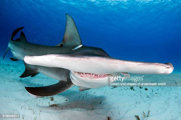 marvelous - south bimini stock photos and pictures