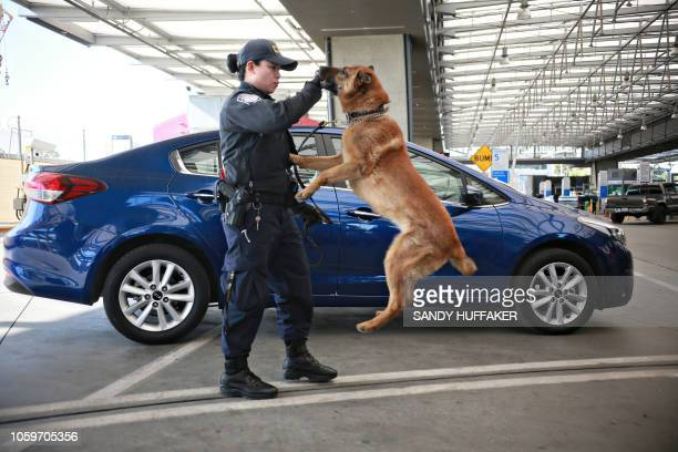 Mary, a drug sniffing shephard, gets a treat from her owner at an inspection station at the Port of Entry along the United States-Mexico border in...