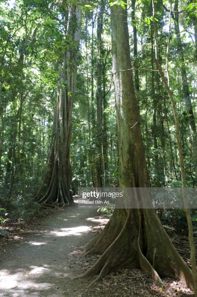 Mary Cairncross Rainforest Walk : Stock Photo