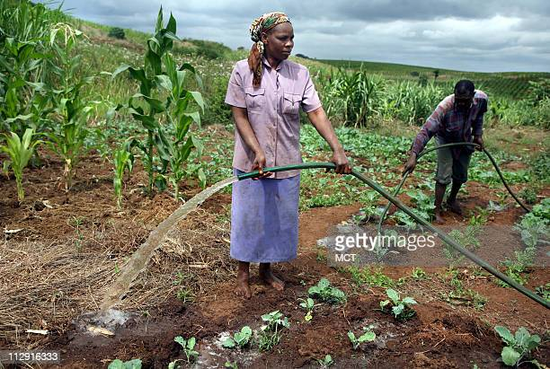 Mary Nyambura and her husband, Joseph Muhia, water their crops with hoses attached to a small water pump in a nearby stream. Africa+=s farms today...