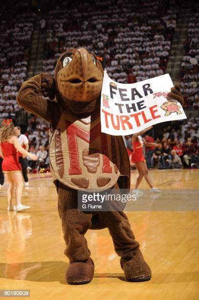 Maryland mascot Testudo during the game between the Clemson Tigers and the Maryland Terrapins at the Comcast Center on March 2 2008 in College Park...