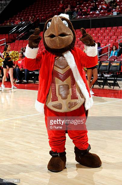 Maryland mascot Testudo performs before the game between the Maryland Terrapins and the Delaware State Hornets at the Comcast Center on December 14...