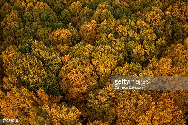 usa, maryland, montgomery county, rockville, trees, aerial view - rockville maryland stock pictures, royalty-free photos & images
