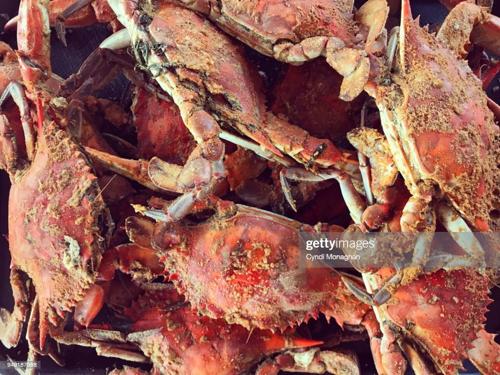 Maryland Steamed Crabs : Stock Photo