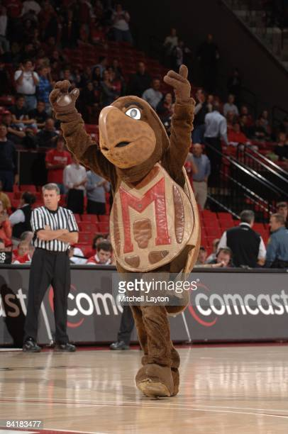 Maryland Terrapins mascot performs during a college basketball game against the Elon Phoenix on December 30 2008 at Comcast Center in College Park...