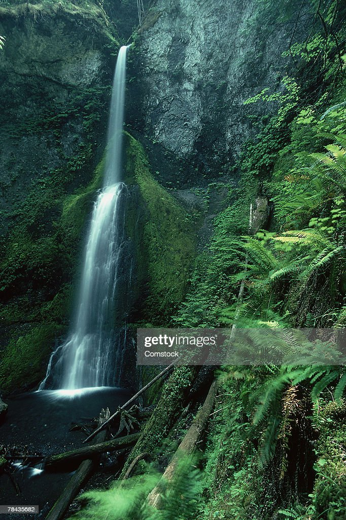 Marymere Falls in Olympic National Park : Stockfoto
