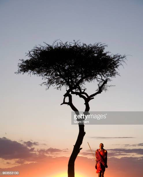 masai guide dancing for tourists at sunset. - guerrier massai photos et images de collection