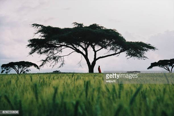 Masai man standing under an Acacia Tree