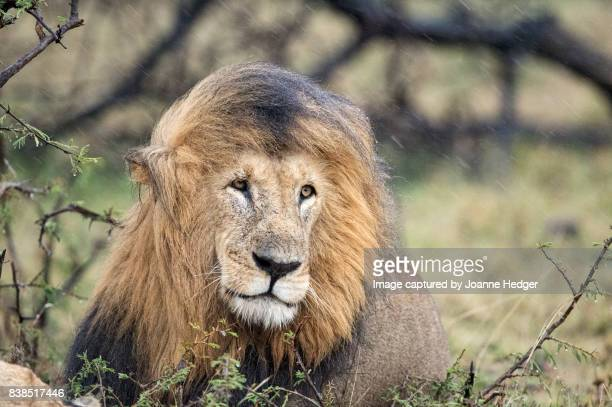 Masai Mara Nature Reserve