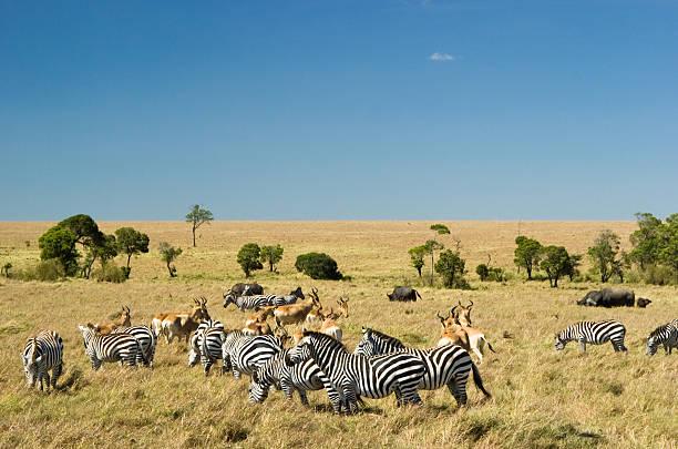 Masai Mara Wall Art