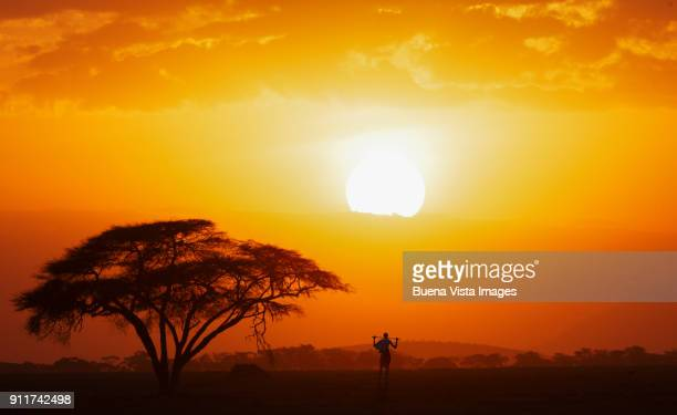 masai shepherd watching sunset - eden pastora fotografías e imágenes de stock