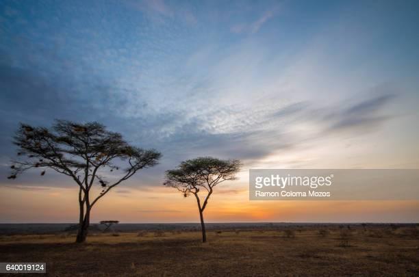 Masai-Mara sunrise