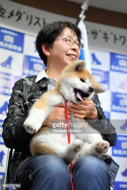 Masaru a female Akita Inu dog to be given to figure skating champion Alina Zagitova of Russia is shown to the public at an event organized by...