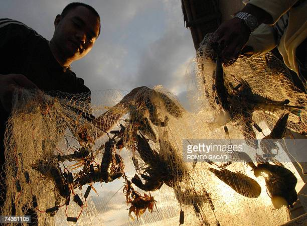 Workers of CrownB Farm harvest live prawns in the central Philippine island of Masbate 15 April 2007 The Philippines said its economy grew at the...