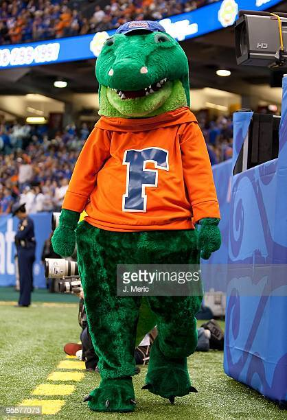 Mascot Albert the Alligator of the Florida Gators walks along the sideline against the Cincinnati Bearcats during the Allstate Sugar Bowl at the...