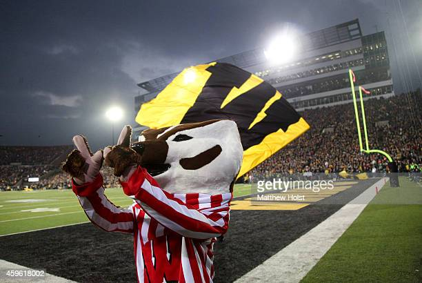 Mascot Bucky Badger of the Wisconsin Badgers performs for fans during the third quarter against the Iowa Hawkeyes on November 17 2014 at Kinnick...