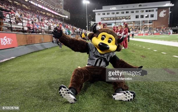Mascot Chip of the Colorado Buffaloes performs in the game against the Washington State Cougars at Martin Stadium on October 21 2017 in Pullman...