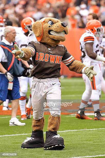 Mascot Chomps of the Cleveland Browns cheers on the team before a game against the New Orleans Saints at FirstEnergy Stadium on September 14 2014 in...