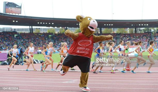 Mascot Cooly performes during the women's 5000m final at the European Athletics Championships 2014 at the Letzigrund stadium in Zurich Switzerland 16...