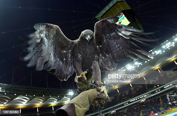 Mascot eagle Attila of Frankfurt is seen during the DFB Cup match between Eintracht Frankfurt and Hamburger SV at Commerzbank Arena on October 27...